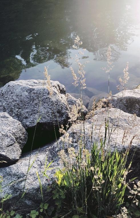 Fluss mit Steinen und Wasserpflanzen in Sonnenlicht